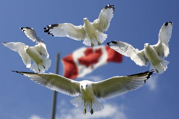 Система страхування в Канаді