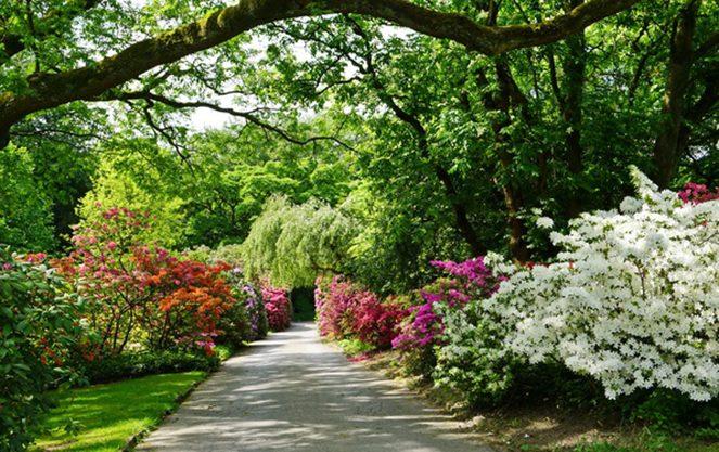 Північна частина англійського саду