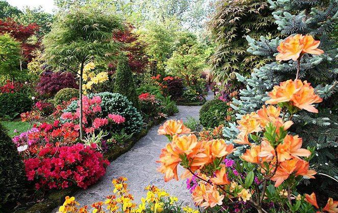Англійський сад в Мюнхені