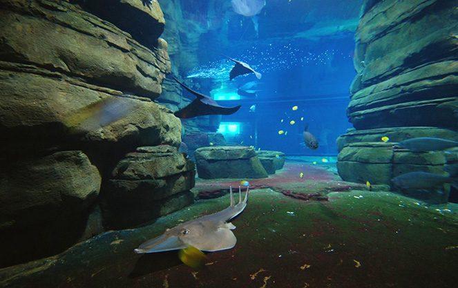 Берлінського зоопарку океанаріум