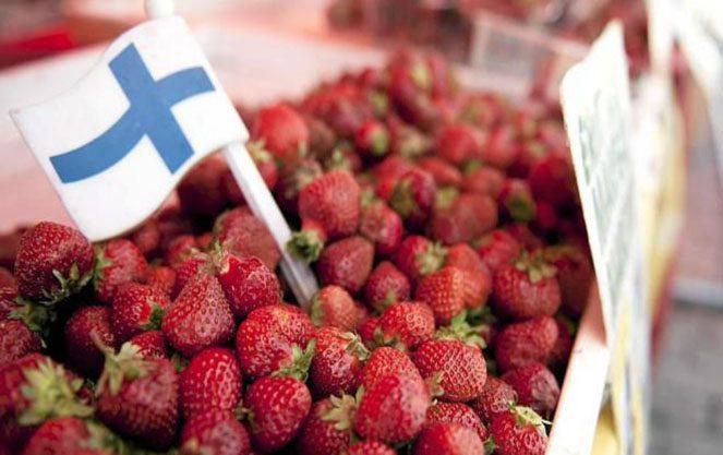 Сезонна робота в фінляндії