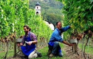 затребувані професії в Італії